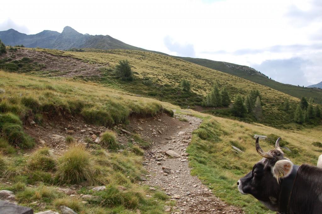Herrlicher Wanderweg bei Meran