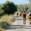 Vie Francigene Wandern Wanderer