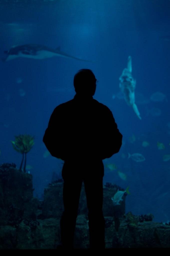 Eines der berühmtesten und größten Aquarien der Welt ist in Lissabon zu finden.