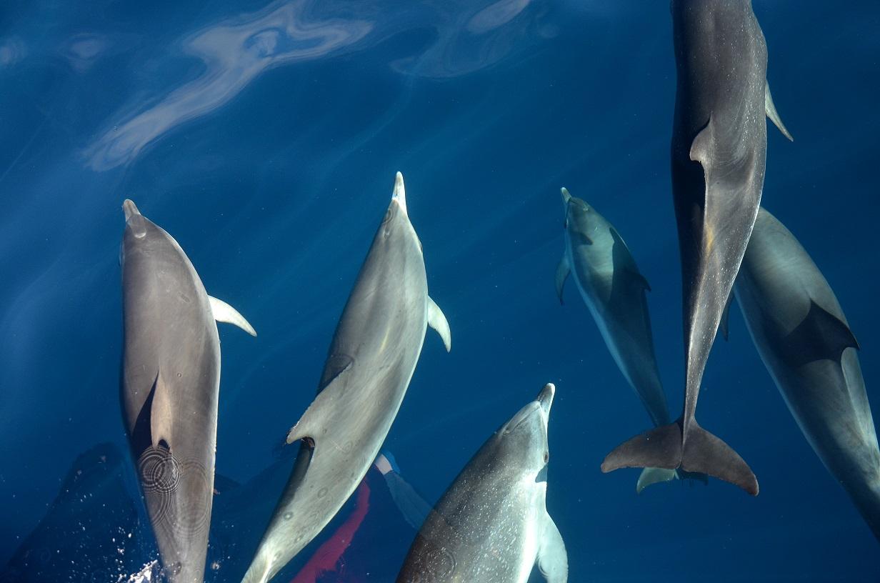Delfine, La Gomera