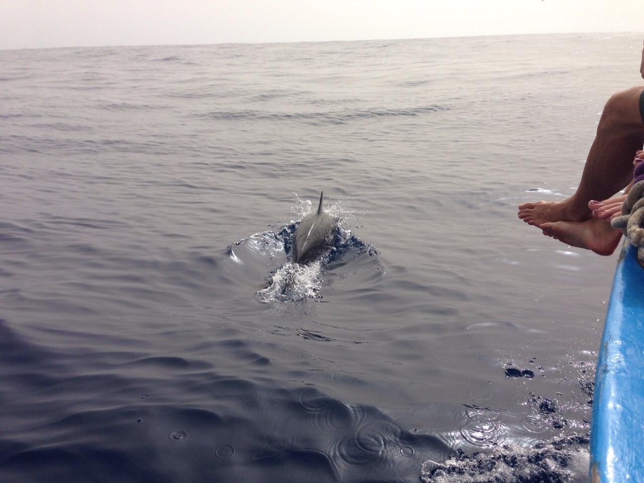Delfin Boot