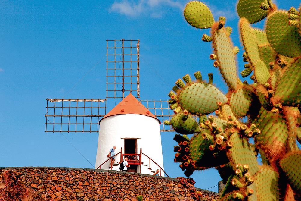 Windmühle und Kakteen auf Lanzarote