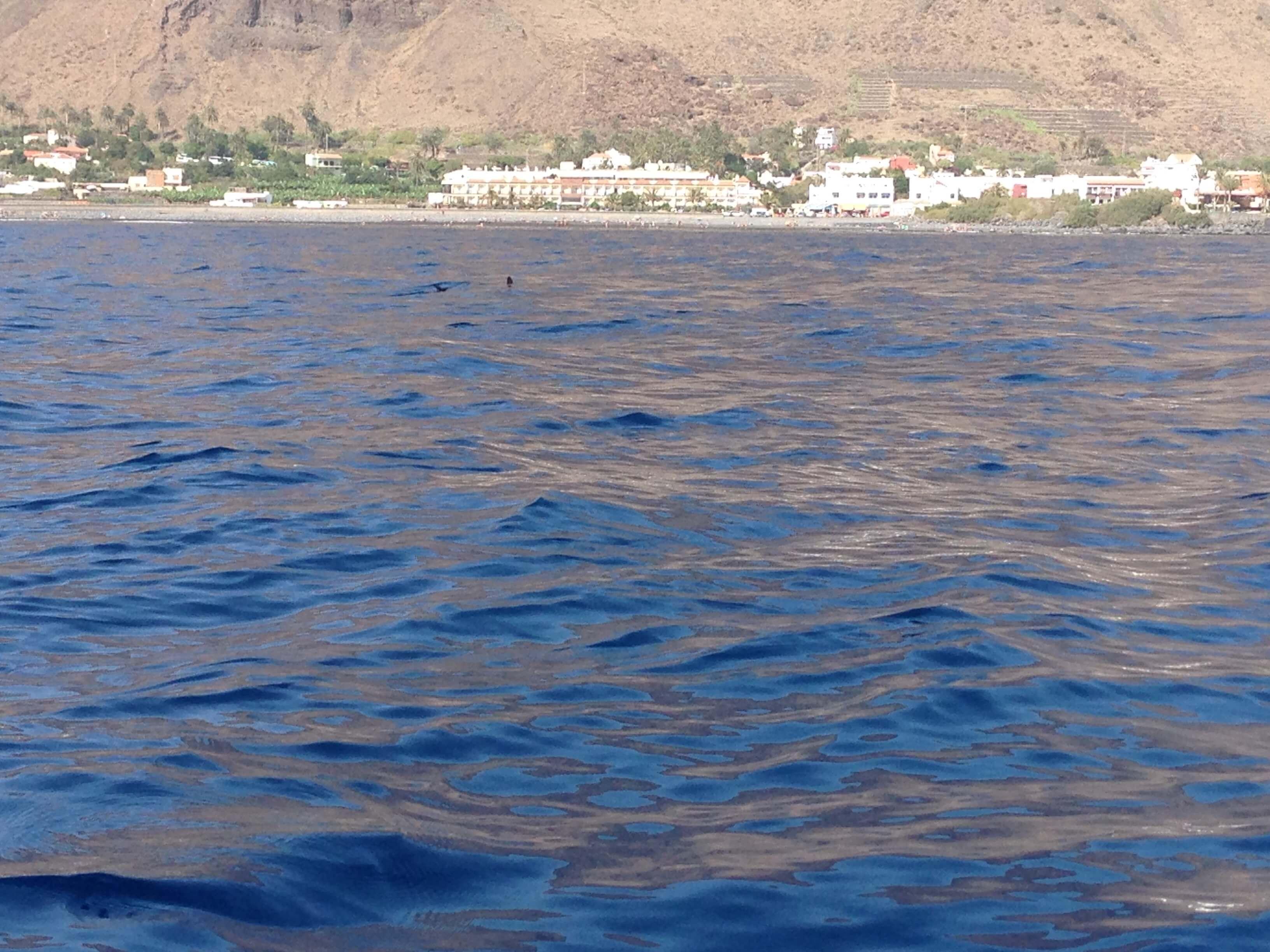 Hai vor der Küste Gomeras