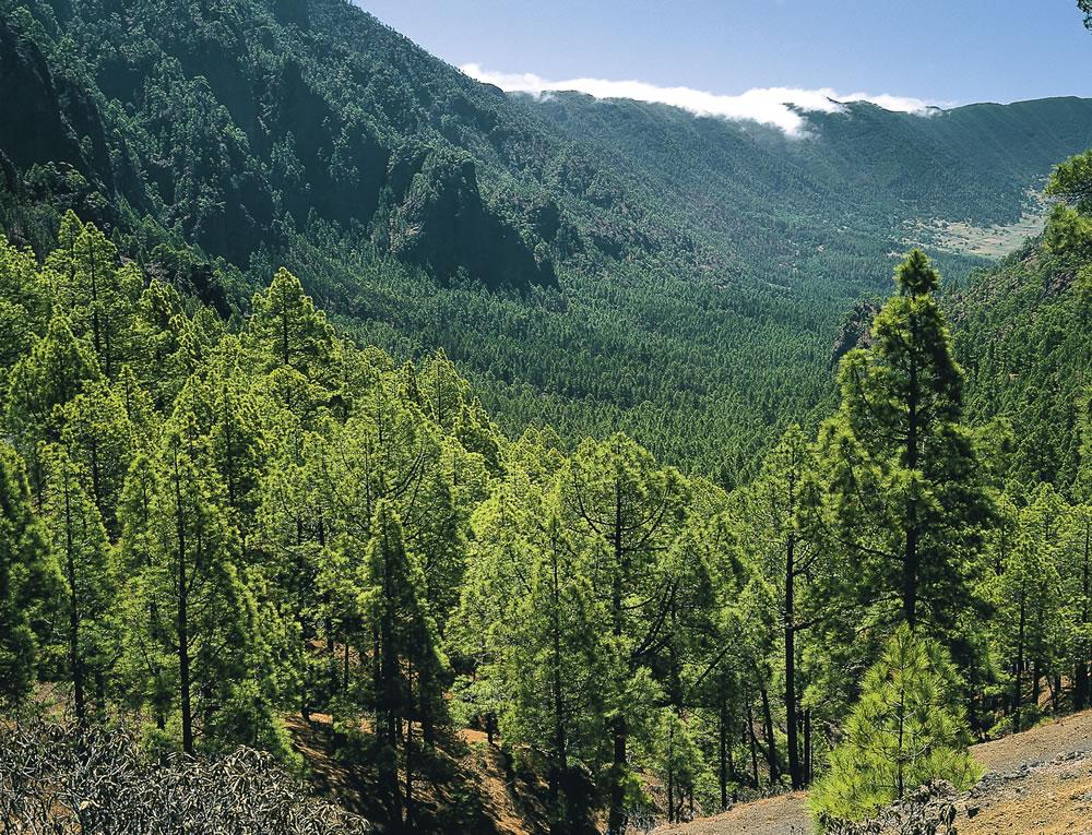 LaPalma-NationalparkCalderadeTaburiente-c-Turespana