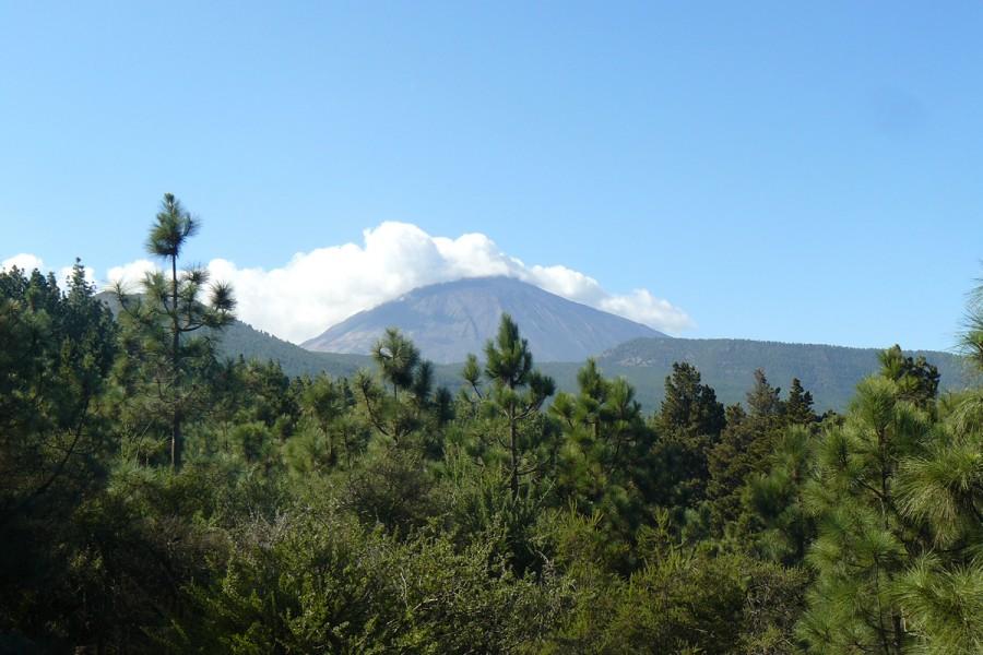 Panorama Teneriffa Teide und Wald