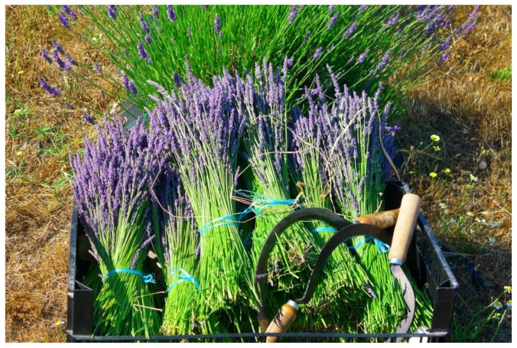 Quinta das Lavandas Lavendelbündel