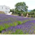 Lavendelfelder Quinta das Lavandas