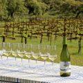 Weinprobe-Andalusien