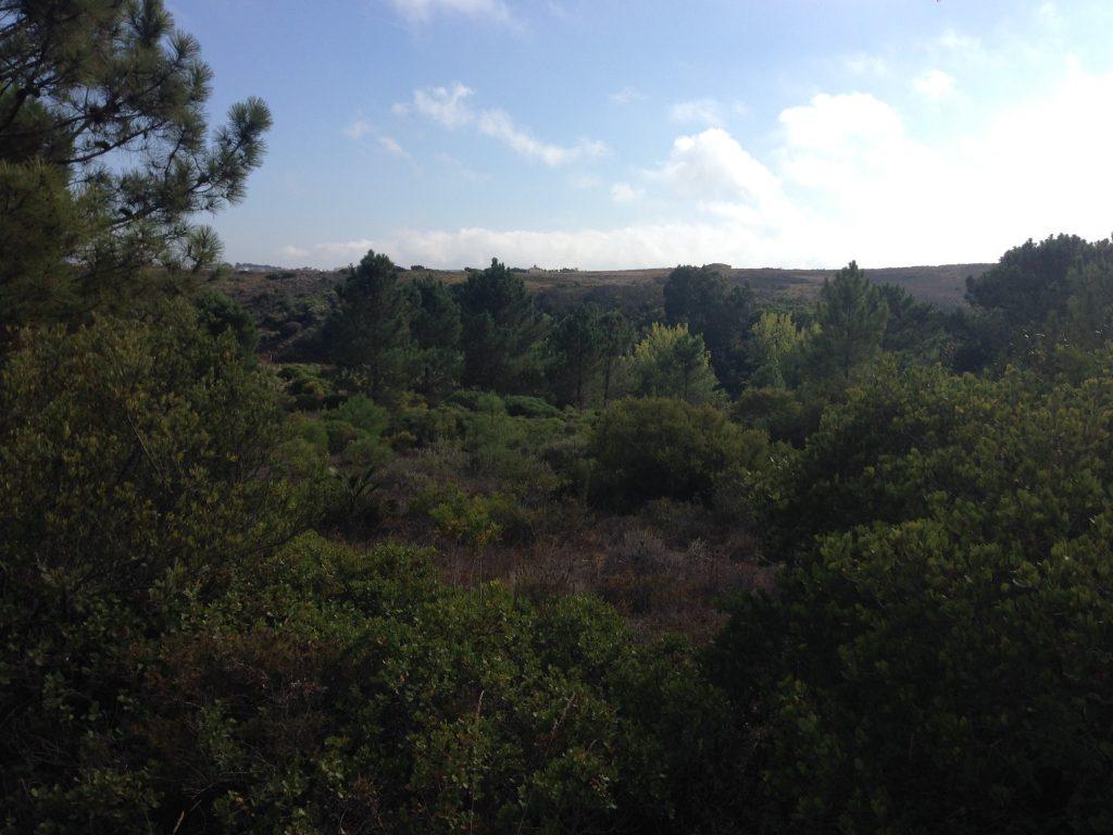 Grüner Wald Wanderung Rota Vincentina
