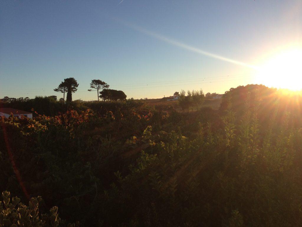Rota Vicentina Morgenstimmung in Almograve