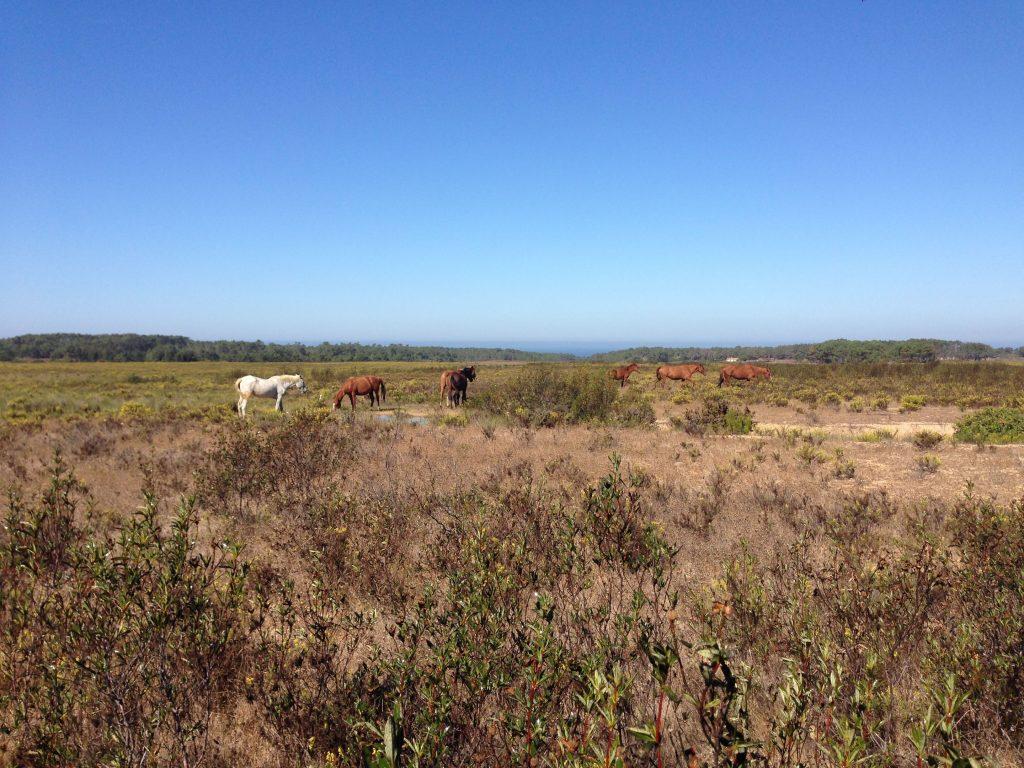 Pferde historischer Wander Weg Rota Vicentina