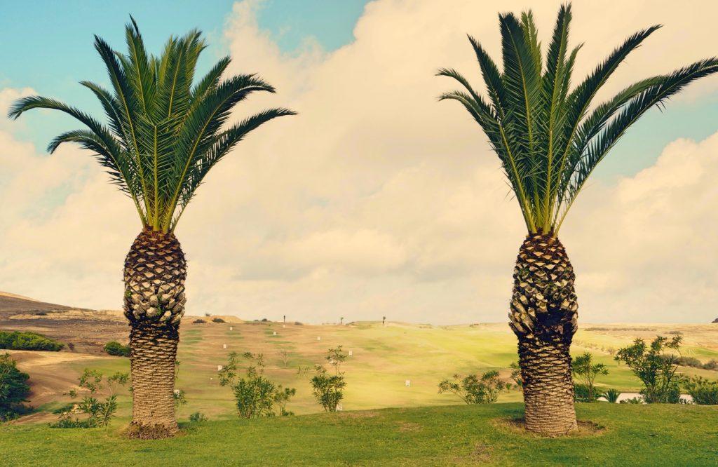 Palmen Golfplatz Portugal Porto Santo