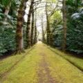 Gingko-Allee Terra Nostra Park