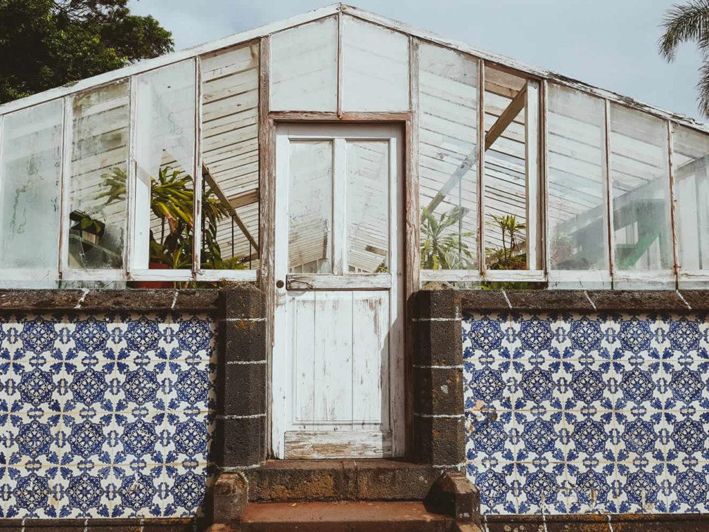 Erstes Ananas Gewächshaus Ponta Delgada