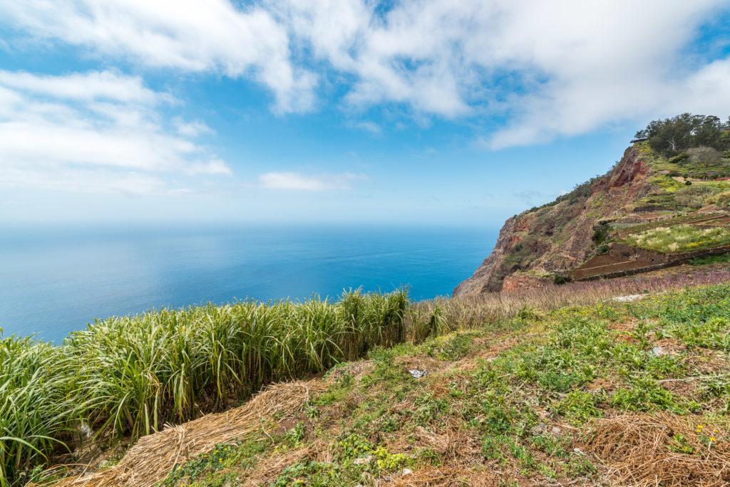 Madeira Zuckerrohrfeld