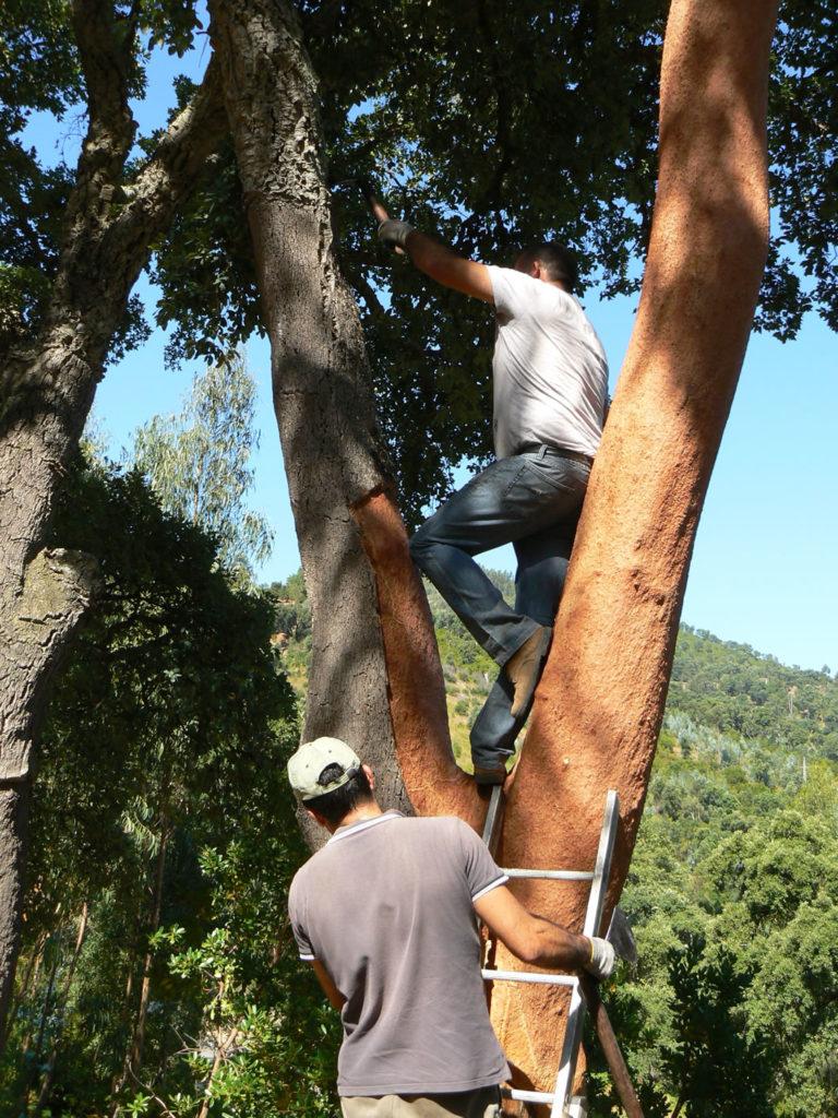Arbeiter bei der Korkernte in Portugal