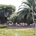 Flamingos Zoo Lagos