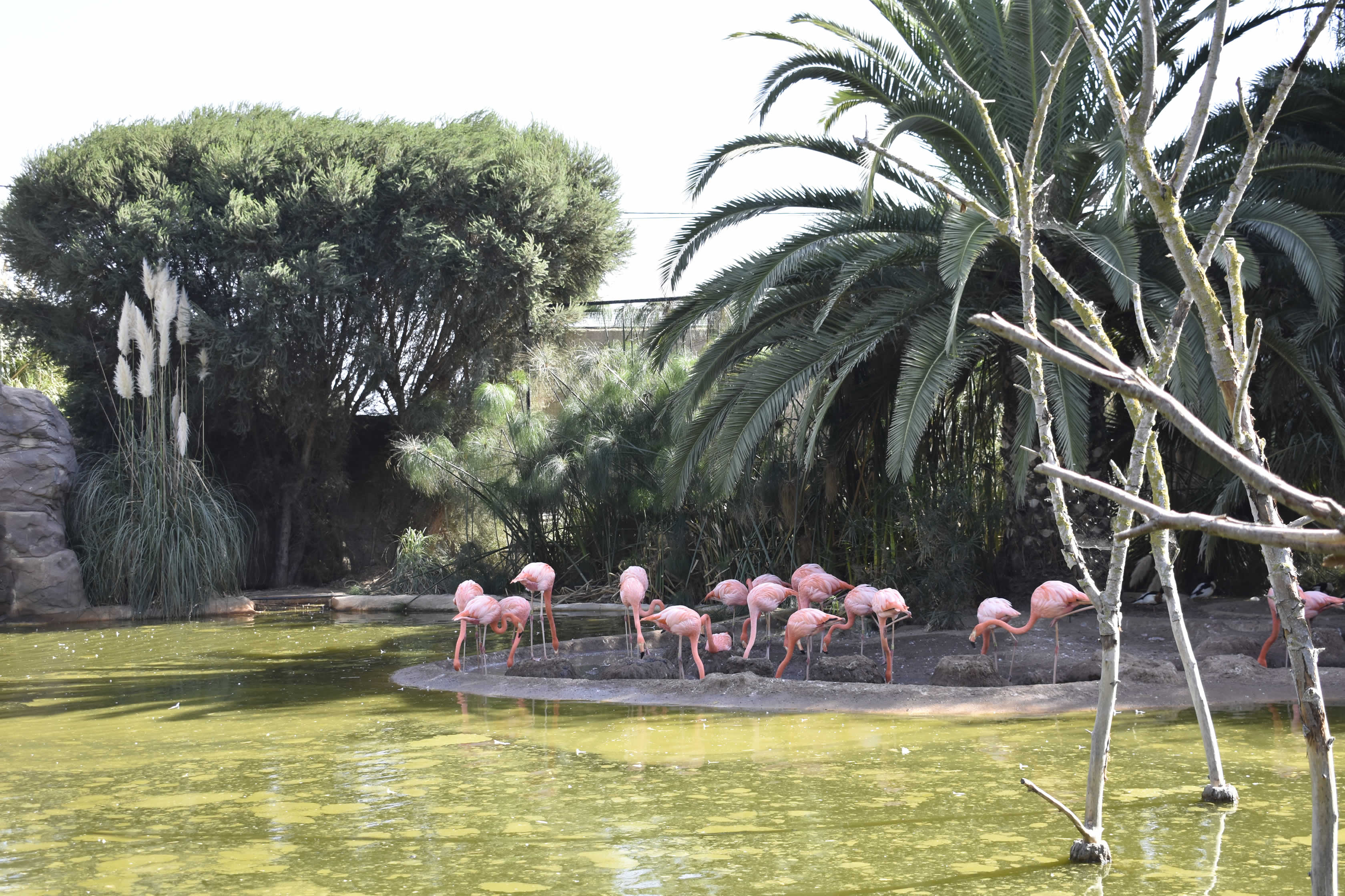 Flamingos Zoo Lagos