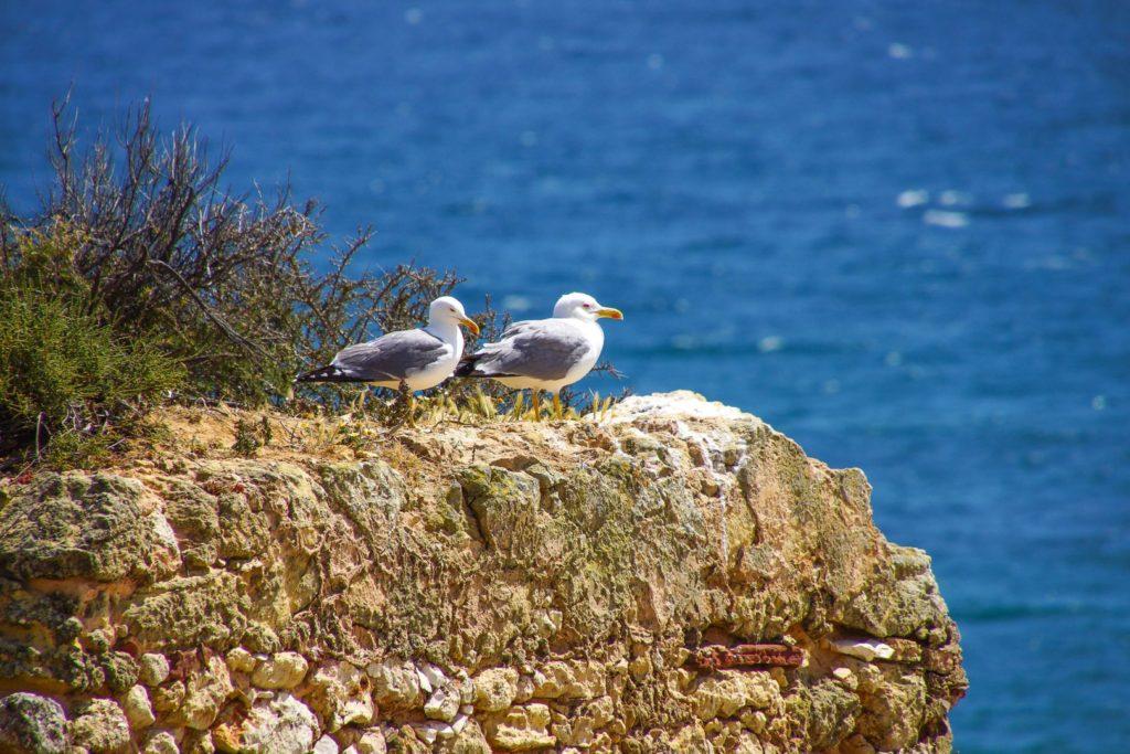 Möwen Algarve Küstenwanderung