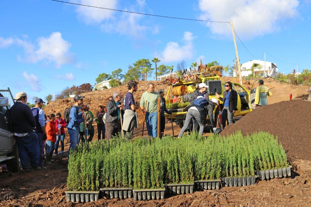 Baum-Beflanzung Algarve