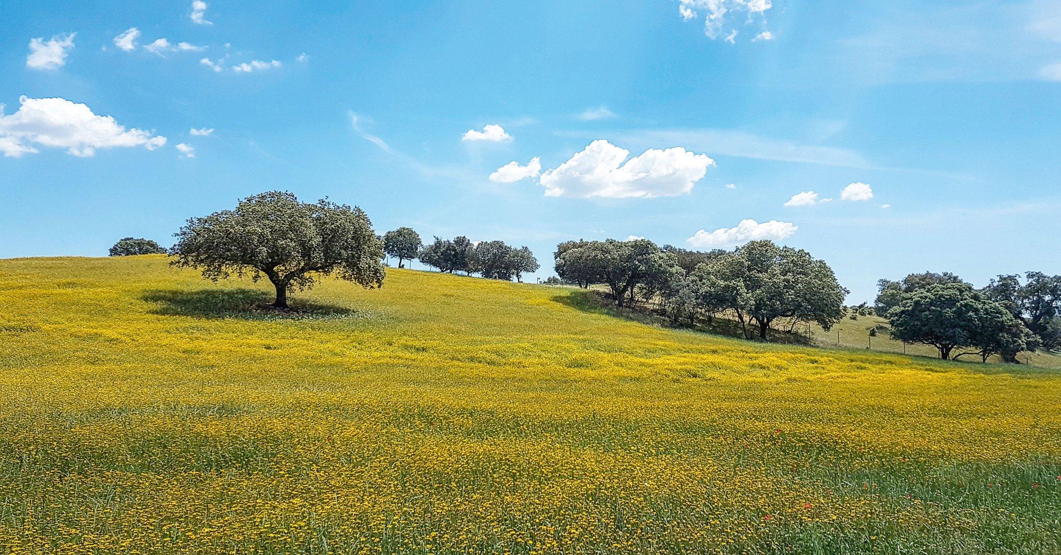 Korkeichen Landschaft Alentejo