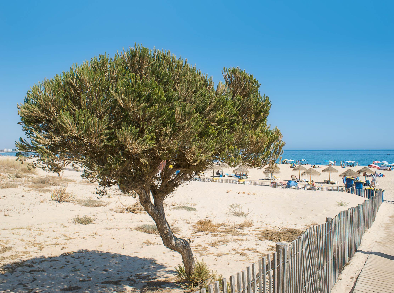 Algarve Meia Praia Lagos