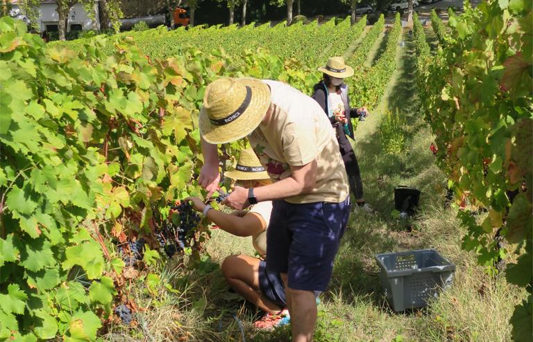 Portugal Alto Douro Weinernte