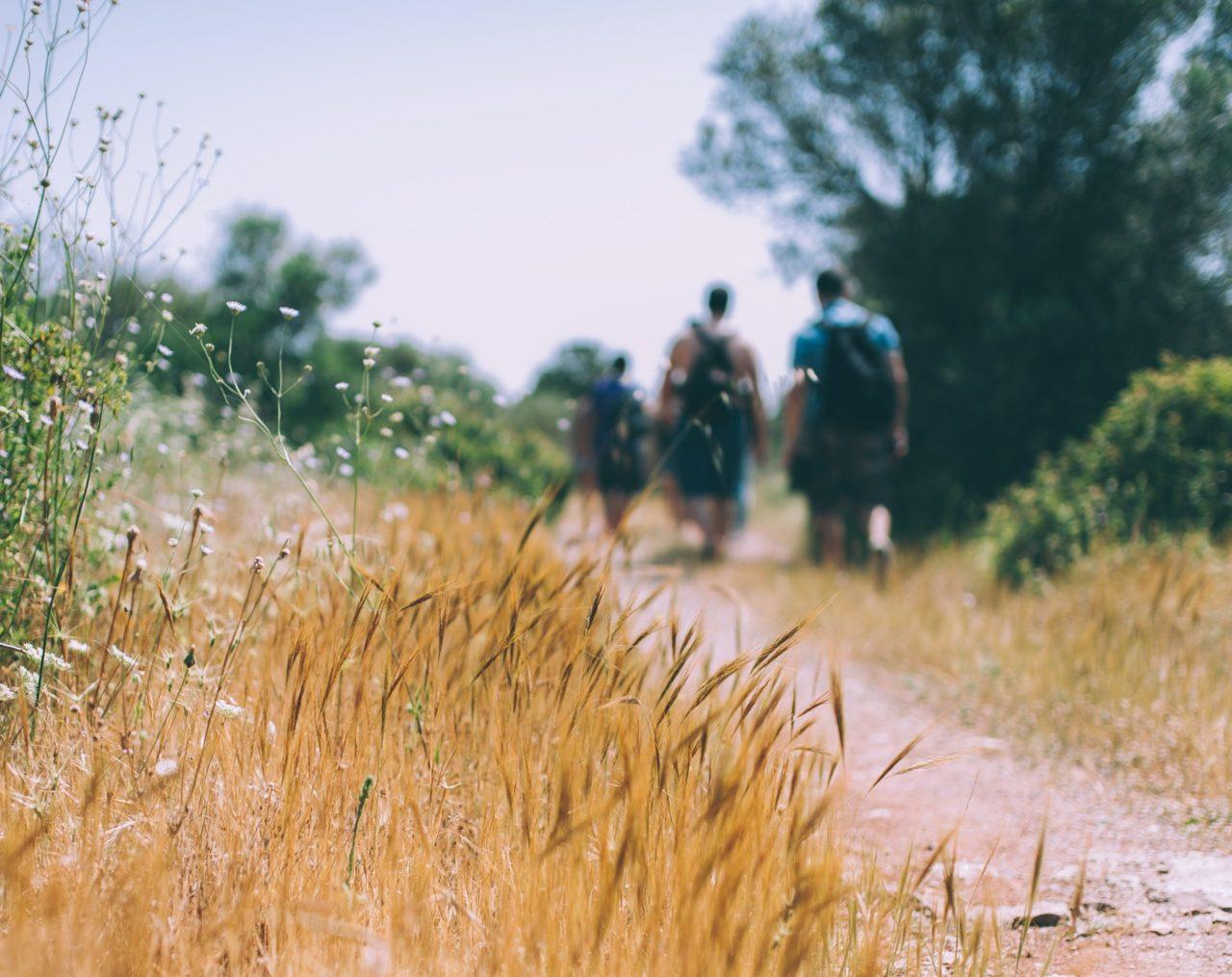 Wanderer auf Feldweg