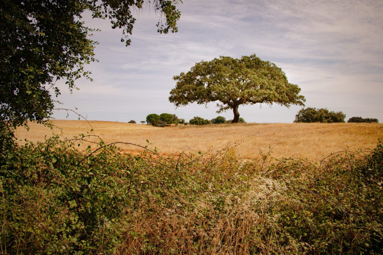 Alentejo Landschaft